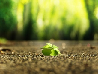 four-leaf-clover-3336774_960_720