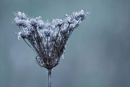 winter-3898314_960_720
