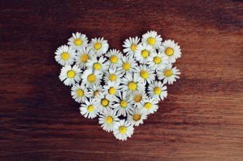 daisy-1403041_1920